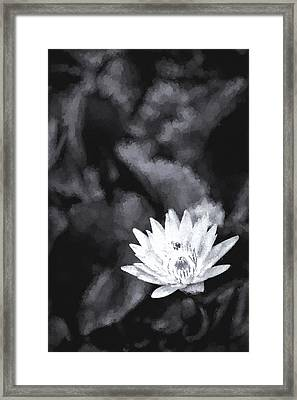 Flight Of The Bee Iv Framed Print by Jon Glaser
