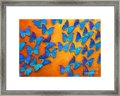 Flight Of The Blue Butterflies Framed Print by Barbara McMahon