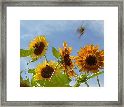 Flight Of The Bubble Bee Framed Print by Julie Geiss