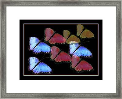 Flight Of The Butterflies Framed Print by Rosalie Scanlon