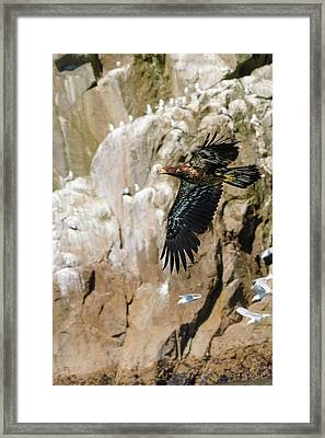 Flight Of The Intruder Framed Print by Emily Bristor