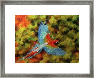 Flight Of The Macaw Framed Print by Mario Carini
