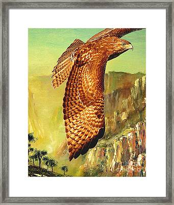 Flight Of The Red Tailed Hawk Framed Print by Wingsdomain Art and Photography