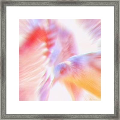 Flight Of The Seagull  Framed Print
