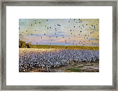 Framed Print featuring the photograph Flight Over The Cotton by Jan Amiss Photography