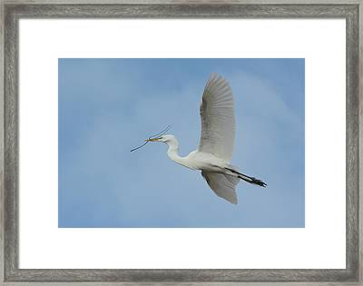 Framed Print featuring the photograph Flight Path by Fraida Gutovich