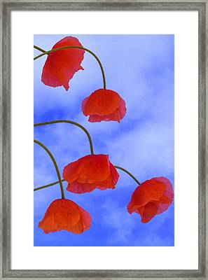 Flight Red Framed Print