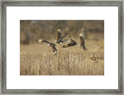 Framed Print featuring the photograph Flight Sequence by Angie Vogel