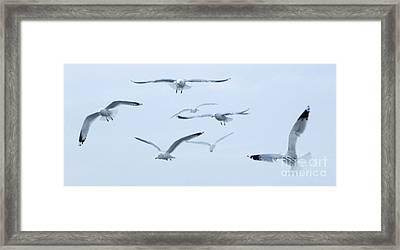 Flight Framed Print by Steve Rudolph