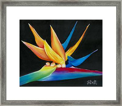 Flight To Paradise Framed Print by Laura Bell