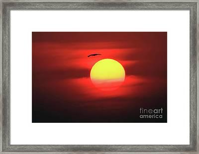Flight To The Sun Framed Print
