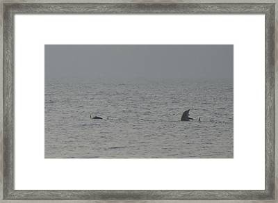 Flipper Framed Print by Bill Cannon
