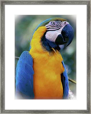 Flirtacious Macaw Framed Print by DigiArt Diaries by Vicky B Fuller