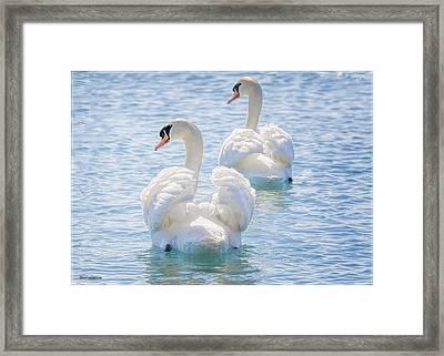 Flirting Swans Framed Print by LeeAnn McLaneGoetz McLaneGoetzStudioLLCcom