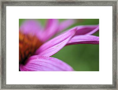Framed Print featuring the photograph Float Away by Christi Kraft