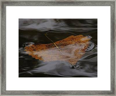 Float Away Framed Print by Todd Sherlock