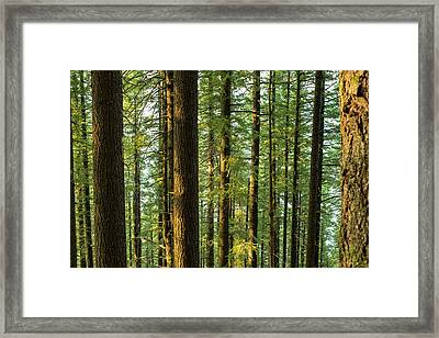 Multnomah Wahkeena Loop Framed Print
