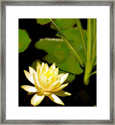 Float Of Elegance  Framed Print