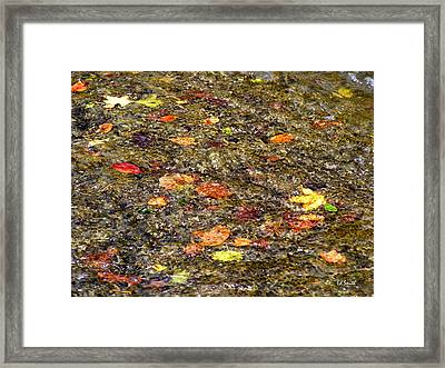 Floaties Framed Print by Ed Smith