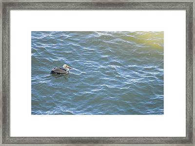 Floating Along Framed Print by Miranda Strapason