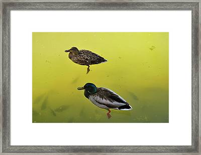 Floating Around Framed Print