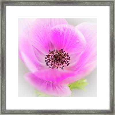Framed Print featuring the photograph Floating by Caitlyn Grasso