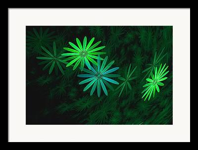 Phlox Digital Art Framed Prints