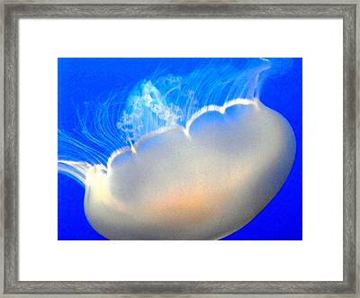 Floating Free Framed Print by Elizabeth Hoskinson