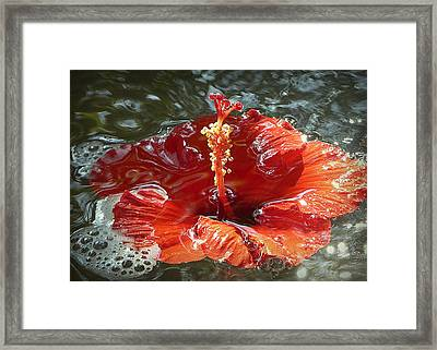 Floating Hibiscus Framed Print