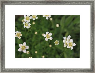 Framed Print featuring the photograph Floating In Green by Shari Jardina