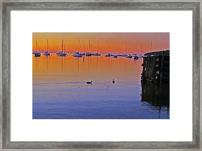 Framed Print featuring the photograph Floating by John Hartman