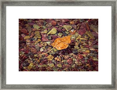 Floating Leaf Framed Print
