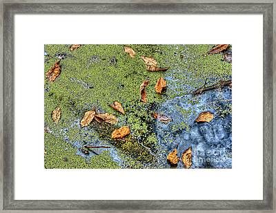 Floating Leaves  Framed Print by Larry Braun