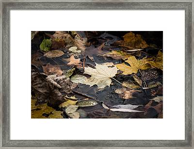 Floating Leaves Framed Print