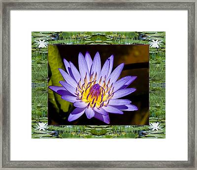 Framed Print featuring the photograph Floating Lilac by Bell And Todd