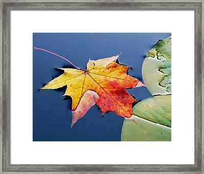 Floating Maple Leaf Framed Print