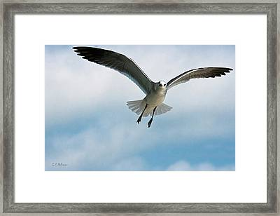 Floating On Air Framed Print by Christopher Holmes