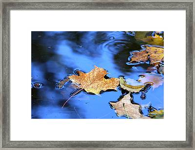 Framed Print featuring the photograph Floating On The Reflected Sky by Doris Potter