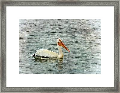 Floating Pelican Framed Print by Krista-