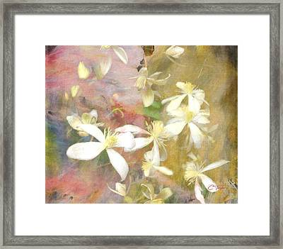 Floating Petals Framed Print