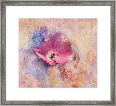 Framed Print featuring the photograph Floating Pink Bloom by Toni Hopper