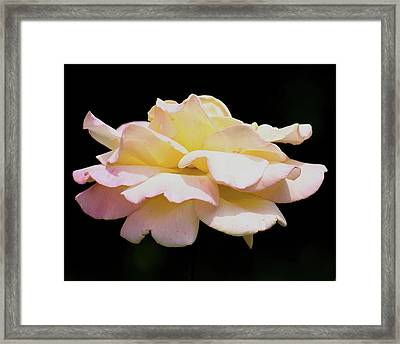 Floating Rose 3894 Framed Print