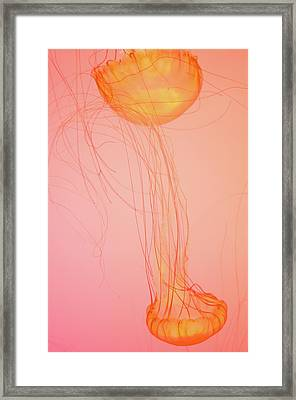 Floating Framed Print by Sheryl Thomas