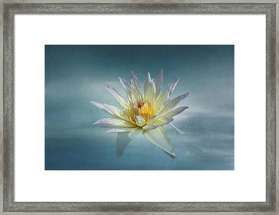 Floating Water Lily Framed Print