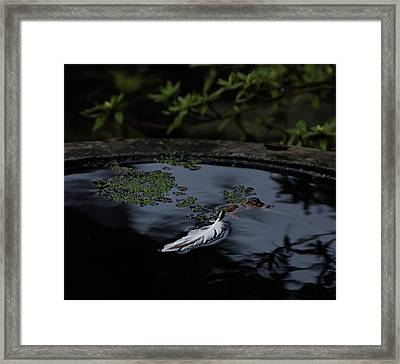 Light As A Feather Framed Print by Marilyn Wilson