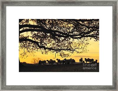 Flock At Sunrise Framed Print by Thomas R Fletcher
