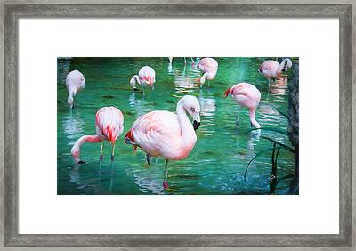 Flock Of Flamingos Framed Print by TK Goforth