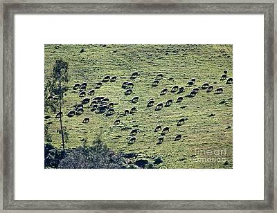 Framed Print featuring the photograph Flock Of Sheep by Bruno Spagnolo