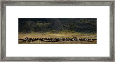 Flock Of Sheep Framed Print by Konstantin Dikovsky