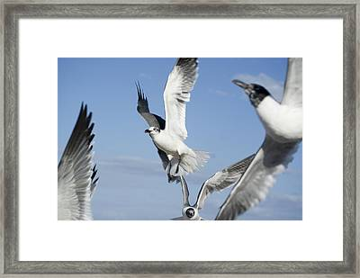 Flocking Mess Framed Print by Jack Norton